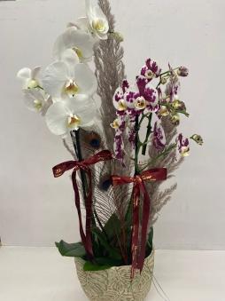Dört dal mix orkide