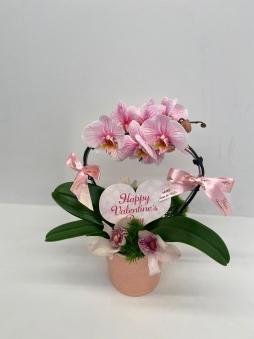 Pembe kalpli orkide