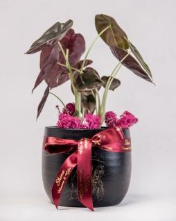 Dekoratif İthal Bitki