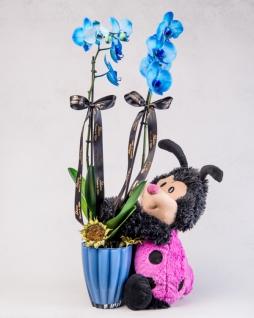 Mavi Orkidem