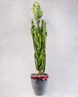 Dekoratif Vazoda Bitki