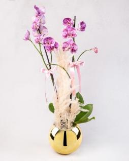 Lila Orkideler