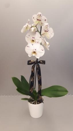 Tek dal benekli orkide