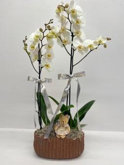 İki adet tek dal orkide